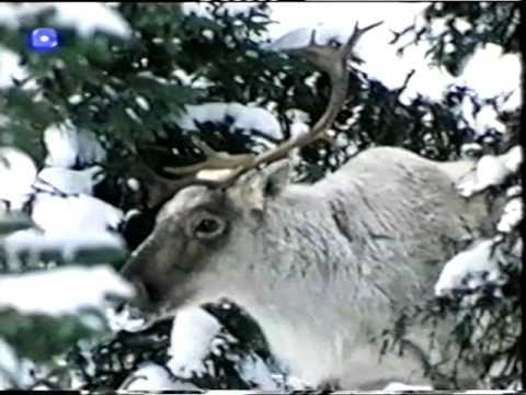 Silva Borealis - Swiss Alphorn Documentary
