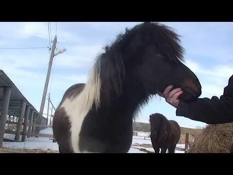 Пони - тоже кони
