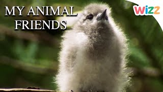 My Animal Friends - Lovely Animals | Full Episodes | Wizz | TV Shows for Kids
