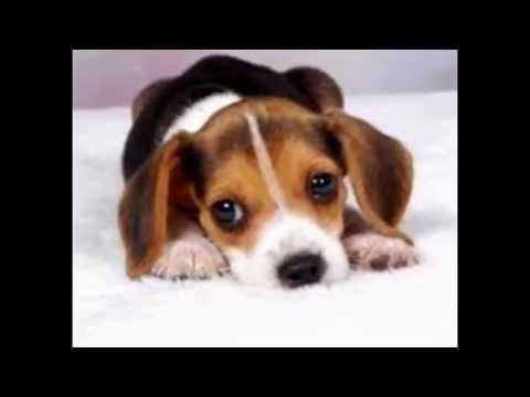 I cani pi belli del mondo youtube - I mobili piu belli del mondo ...