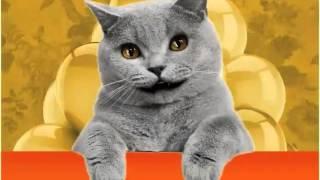 Cumple Gato