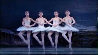 Tchaikovsky Swan Lake Dance Of The Little Swans