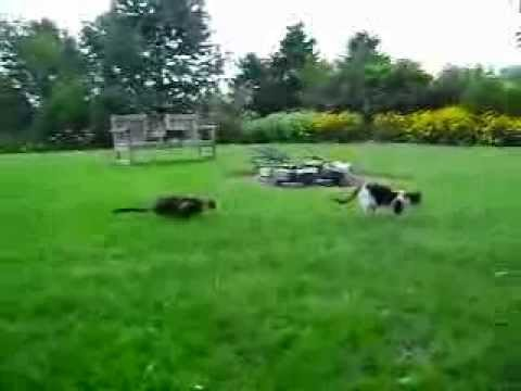 Cat on Cat Ambush