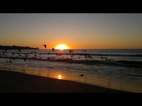Increible miles de gaviotas Playa Nudista Luna - thousands of gulls incredible nude beach HD