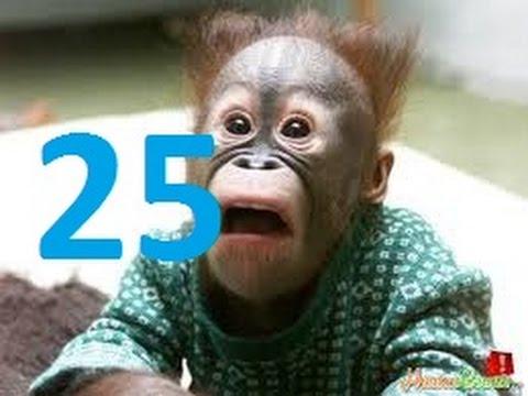 ● Kênh Nhị ● Đọc Suy Nghĩ Động Vật (Kì 25) ✔ | bình luận cf ngu người funny ha noi sai gonđọc suy nghĩ động vật