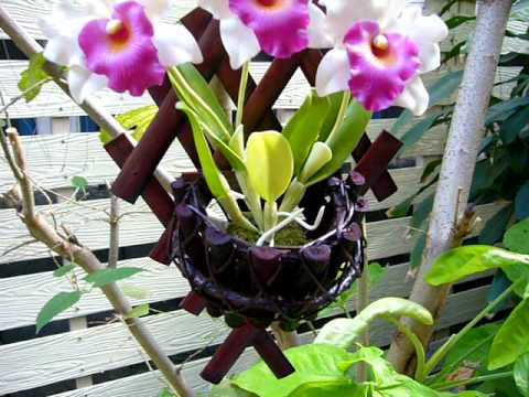 Wall Hanging Orchid Flower Baskets Youtube