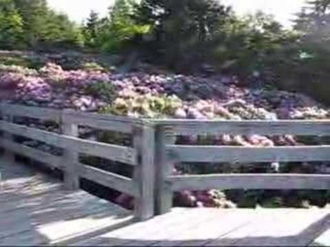 Roan Mountain Rhododendron Video