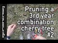 Pruning Combination Cherry Tree #2