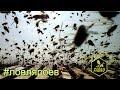 """""""Давайте вместе словим пчел"""" & Ловля роев #3"""