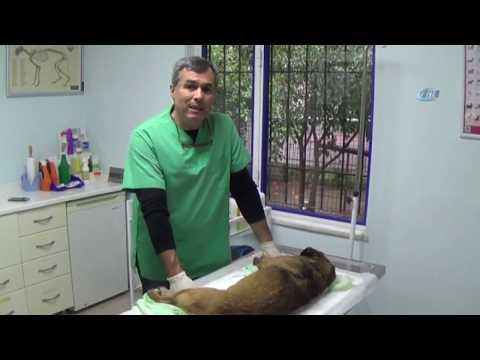 Marmaris'te 2 Köpek Zehirlenerek Öldürüldü