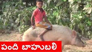 Boy Crazy Pig Riding In Kakinada | Pig Baahubali | Jordar News | HMTV