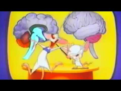 Describing The Brain In Autism In Five Dimensions