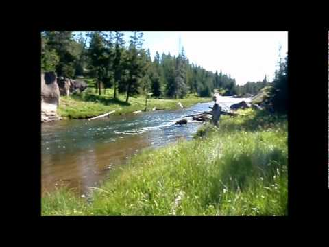 Fly Fishing Frenzy | fly fishing Yellowstone rivers and streams. Gibbon river and Madison river