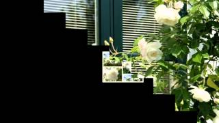 Eine Weisse Rose  |  Detlev  LAIS