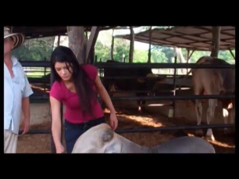 Ordeñando Vacas