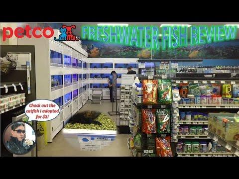 Petco Freshwater Fish Review   Fish Adoption