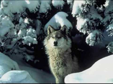 Wolf Medicine: Native American Flute - Blues Mama Original