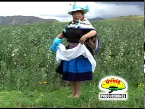 ROSAS Y CLAVELES (Huaylarsh Antiguo)