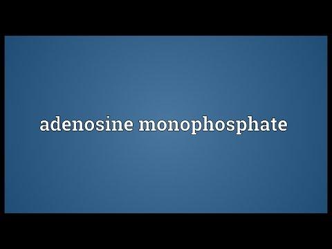 Header of Adenosine Monophosphate