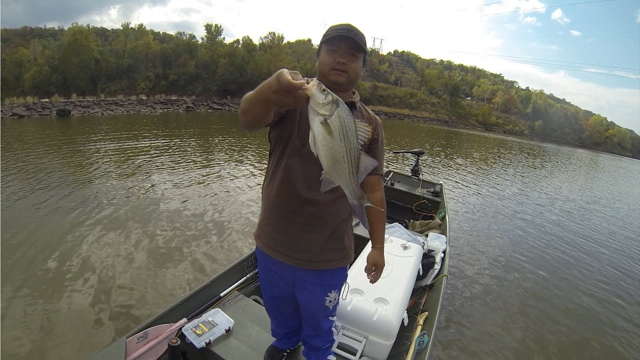 White bass fishing on arkansas river oow outdoors youtube for White river fishing