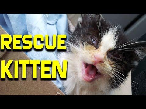 拾われて死にそうなところをご主人が救助して一緒に暮らす可愛い猫