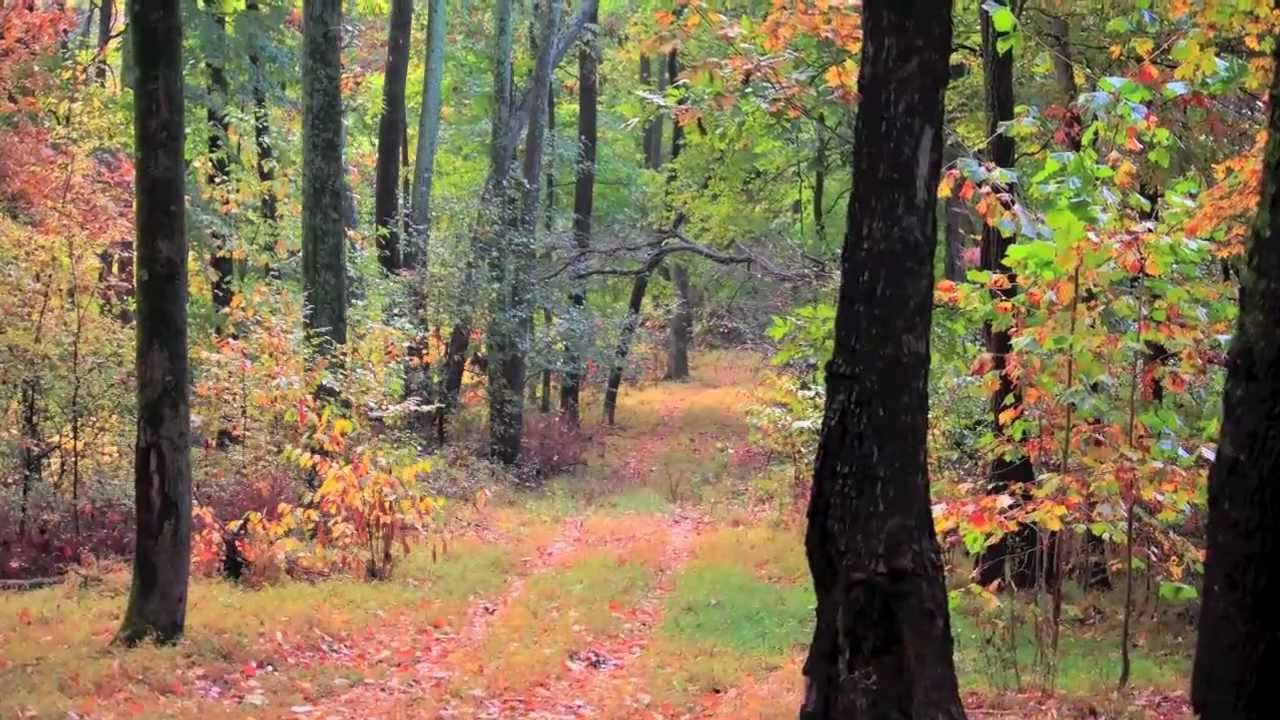 mt pleasant tennessee 200  acre farm for sale  tennessee