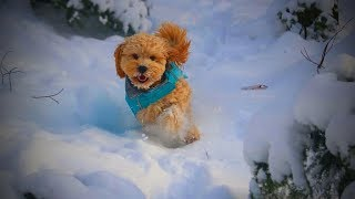 Dogs Loves Snow 🐶❄️ Lovely And Funny Dogs Playing with Snow (Full) [Funny Pets]