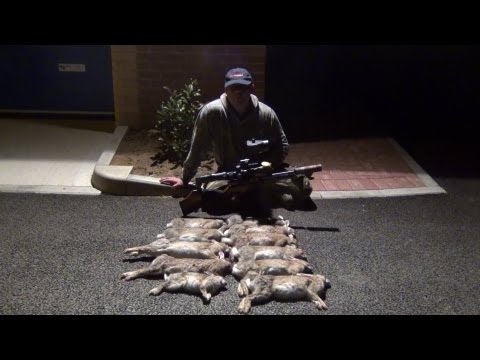 Shooting Rabbits with the HW100KT. BSA Ultra SE and Nite Site NS200 go rabbit hunting