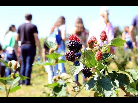 Cobertura do VII Encontro sobre Pequenas Frutas e Frutas Nativas do MERCOSUL | Programa Terra Sul