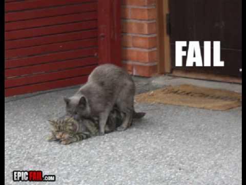 26 stupid cat fails