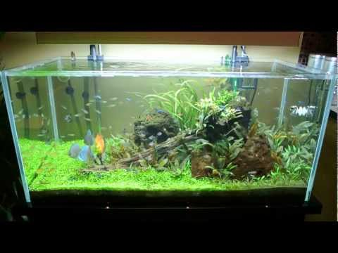 All pond solutions open top aquarium fish tank 6wks update for Cloudy water in fish tank solutions