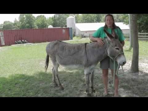 Ditr Mo Mo The Donkey video
