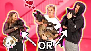 WE CAUGHT PUPPY APOLLO SMASHING ANOTHER DOG..?! {CHEATING}