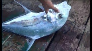 Câu cá giải trí - hành trình câu cá biển Campuchia - phần 2