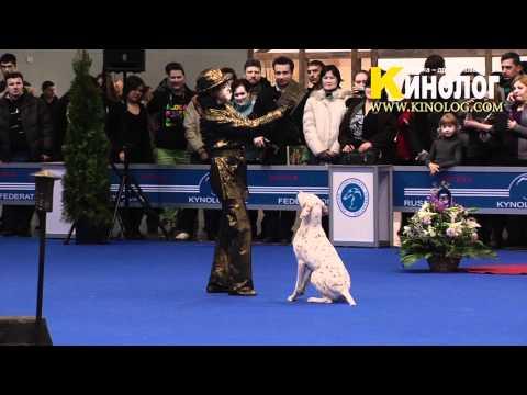 05 Dog Show Eurasia  2012 / Russia / Moscow. Freestyle.