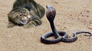 8 ATAQUES MAIS IMPRESSIONANTES DO MUNDO - Cobras