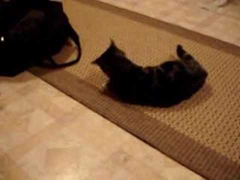 My cats first experience with catnip