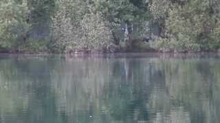 Grain Baits Vallee Lake 1 2014