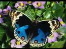 Butterfly..