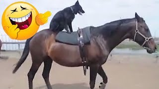 LIKE A BOSS COMPILATION 😎😎😎AMAZING 10 MINUTES🍉🍒🍓#15