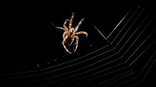 Spider Web Building Time-lapse | BBC Earth