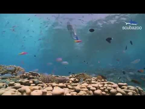 Scuba Diving Maldives - Beautiful HD Underwater Footage