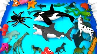 Learn Sea Animal and Wild Zoo Animals Learn Colors and Animal Names For Kids