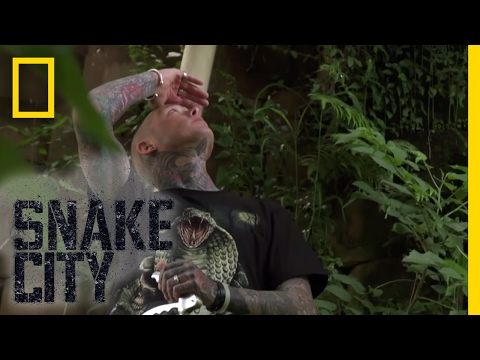 Where's the Mamba? - Episode 4   Deadliest Snake Encounters