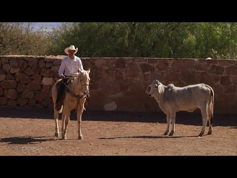 Tecnicas para Hacer un Caballo Coleador 2