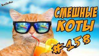 Приколы С Котами - Смешные Коты - Funny Cats 2018