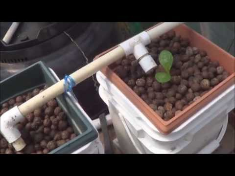 Testing a Couple of Dutch Buckets in my Aquaponic Greenhouse