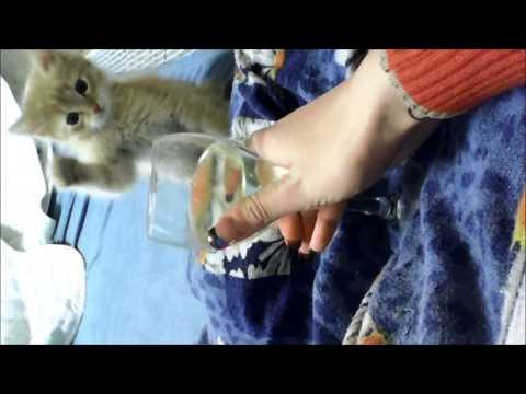 Котенок против алкоголя [Kitty vs alcohol] HD