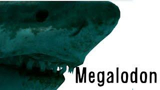 Paleo Profile - Megalodon