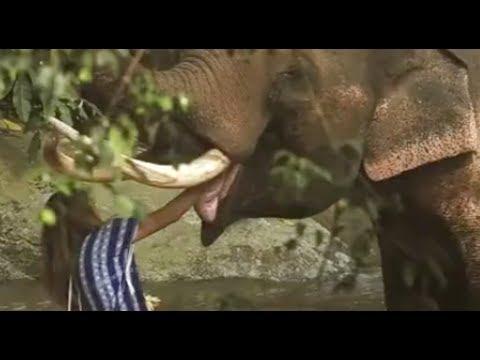 Sieh, was dieses Mädchen mit 10 wilden Elefanten gemacht hat